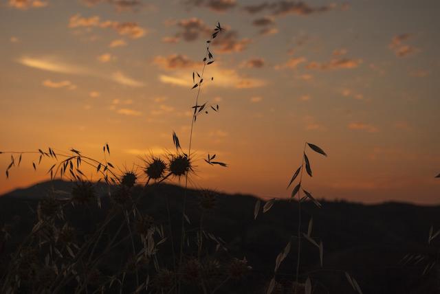 Sunset / Rise 13